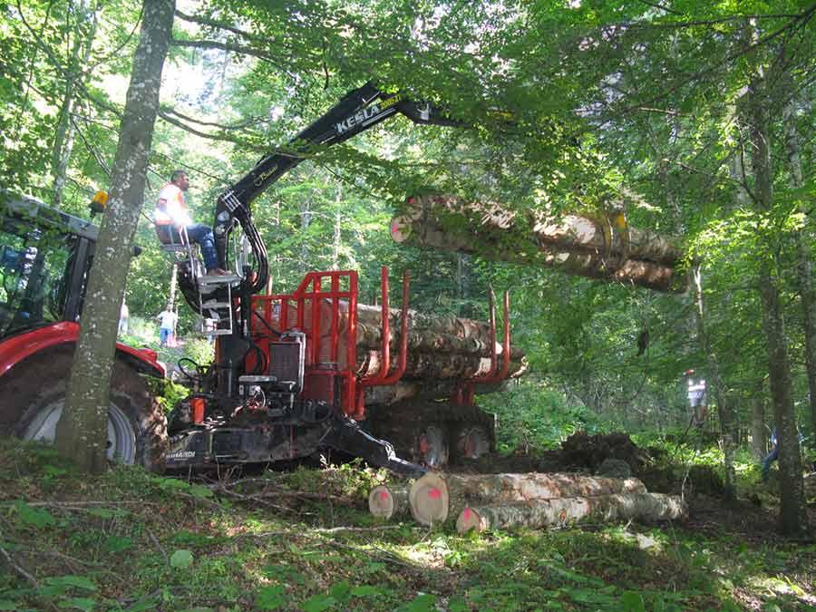 macchina forestale