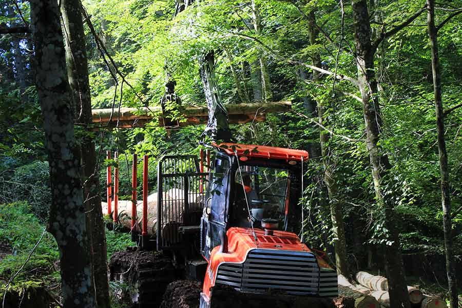 macchine forestali