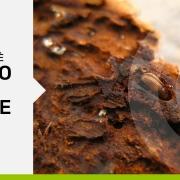 parassiti del legno come prevenire