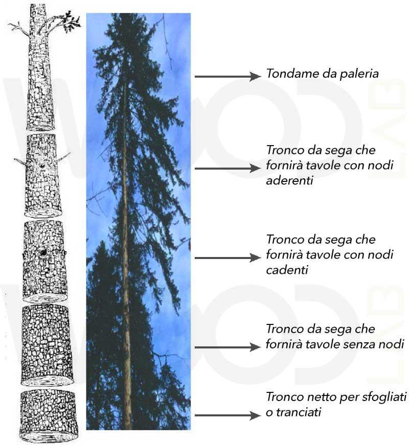 parti del tronco