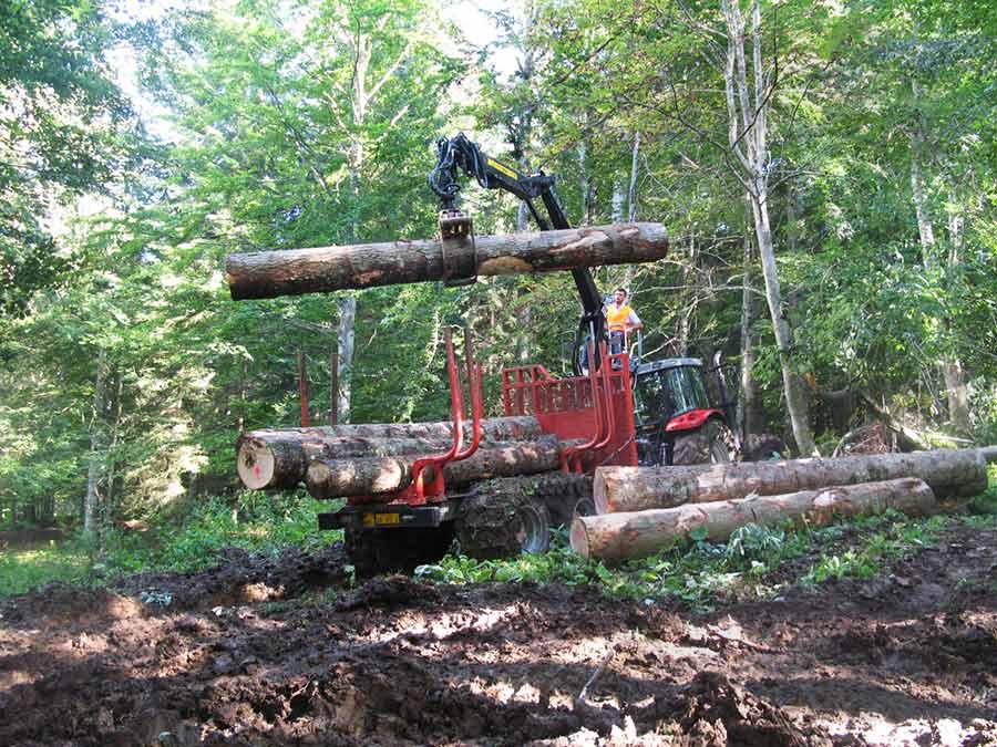 raccolta legname macchina forestale