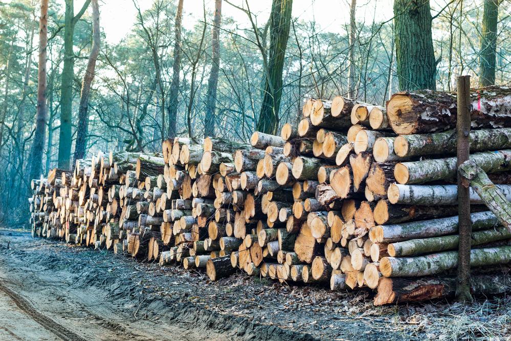 sfondo con legname