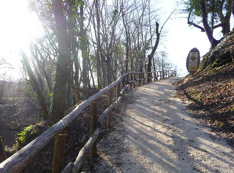 sentiero bosco del castagno