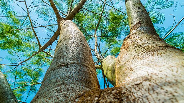 tronchi albero