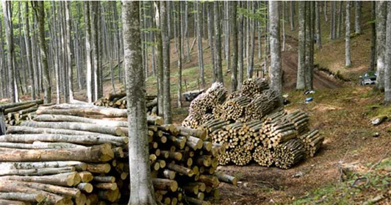 legno tagliato nella foresta