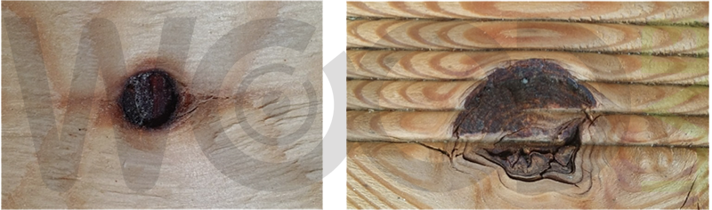 nodo alterato da presenza di funghi