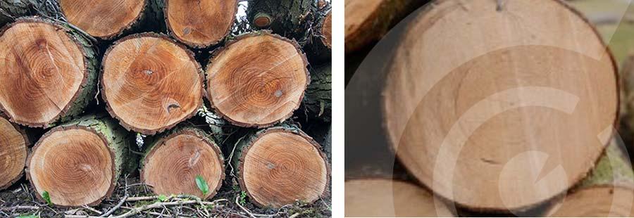 tronchi albero segati