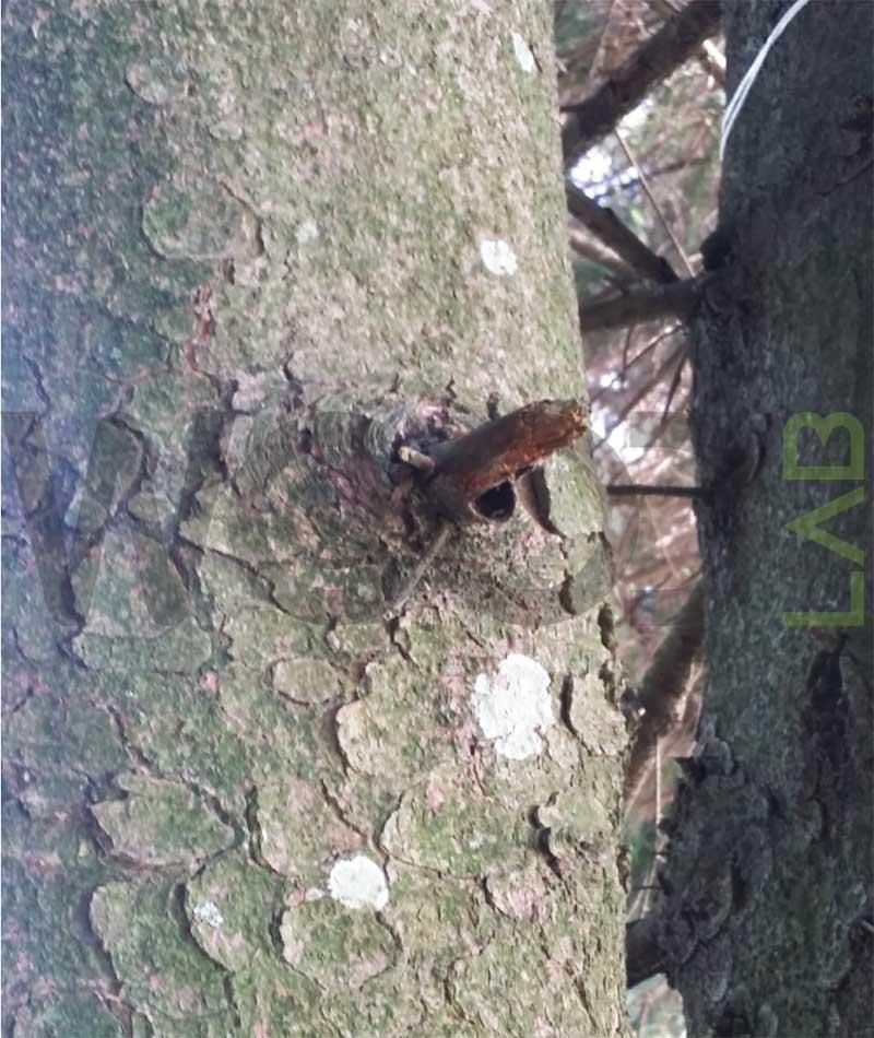 tronco albero con nodo
