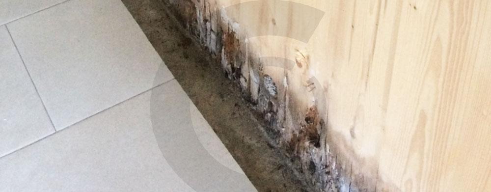 marcescenza base casa in legno